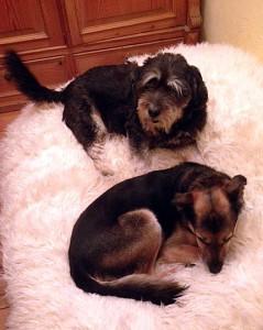 Casper & Linus, Assistant Dog Coaches. Foto: Tanja Wilke